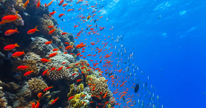 nine fun facts about ocean life the epoch times
