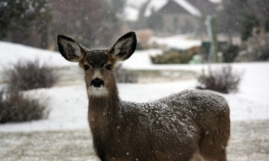 Firefighters Rescue Deer Trapped On Ice