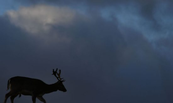 Scientists Warn a Mysterious Deadly 'Zombie' Deer Disease Could Spread to Humans