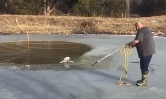 Man Saves Dog From Frozen Pond—Here's How He Did It