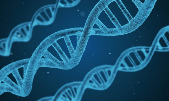 DNA Nanorobots Successfully Target and Kill Cancer