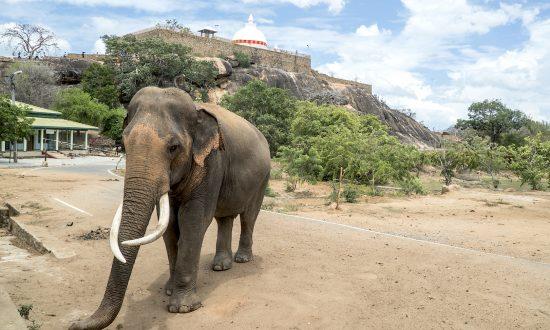 A Visit to Sri Lanka's Yala National Park