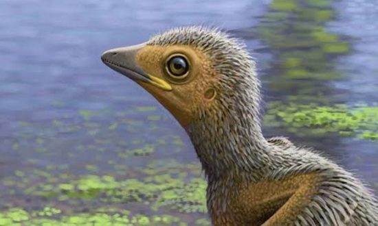 Tiny Fossilised Prehistoric Chick Sheds Light on Birds During the Age of the Dinosaurs