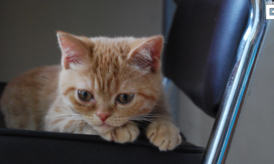 Cat looks sad, but when you take a closer look at his face—you realize it's not the case at all
