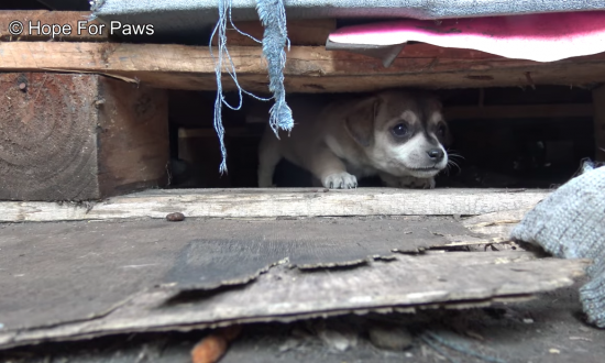 Women rescue mom & puppies from shipping yard. But when 1 puppy is too scared to go—they take action