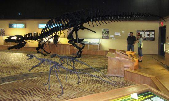 Canadian Dinosaur Museum Faces Extinction