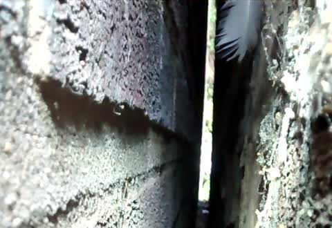 Firefighters Rescue Cat Stuck in Tiny Gap