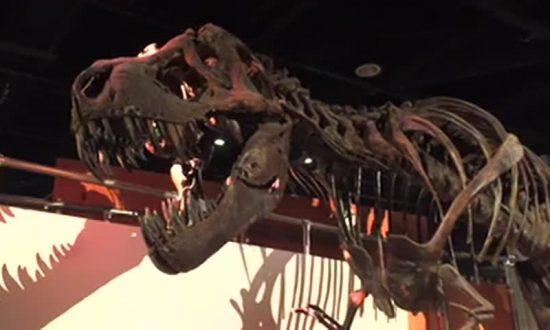 Dinosaur Genetic Code Finally Cracked, Scientists Claim