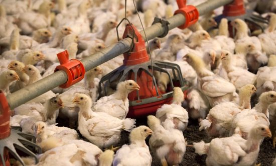 US Seeks End to China Poultry Import Ban