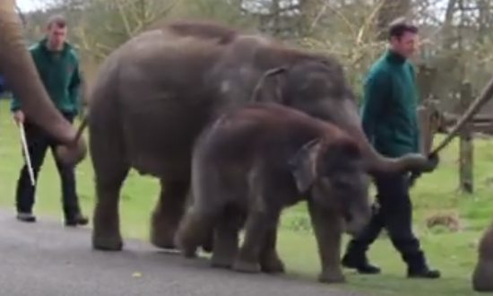 This baby elephant is caught daydreaming, but look at what's behind him
