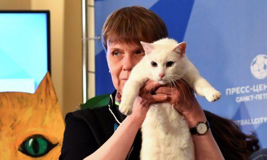 Russia's Psychic Cat 'Achilles' Picks Winner of World Cup Opener