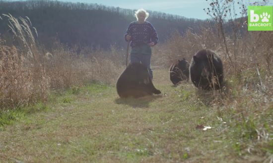 Isolated man has no greater joy in the world than going on hikes with his bears