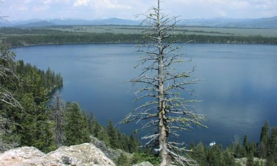 Yellowstone: Grand Teton National Park Partially Closed After Large Fissure Opens