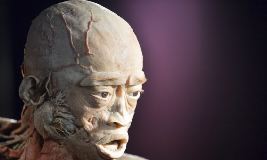 Bodies Used for UK Exhibition Could Come From Prisoners of Conscience