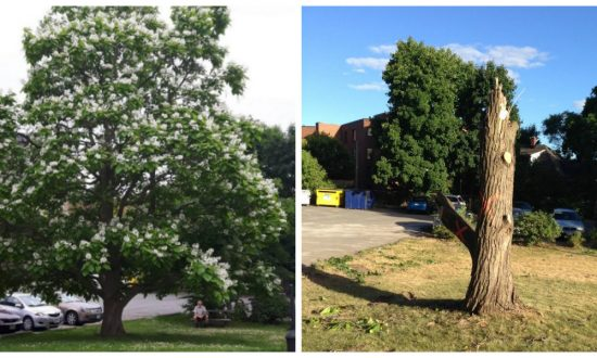 The Sad Reality for Trees at a Time When We Need Them Most