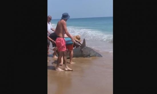 Hammerhead Shark Caught and Released on North Carolina Beach
